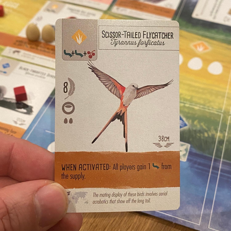 Scissor-Tailed-FlyCatcher,-Wingspan